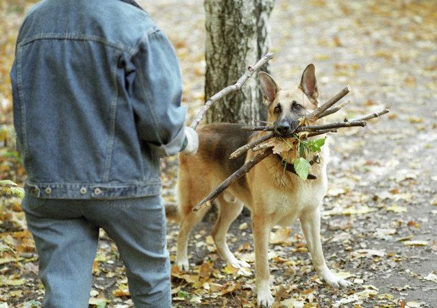 媒体:中国济南某社区禁止养狗并威胁要入户打狗