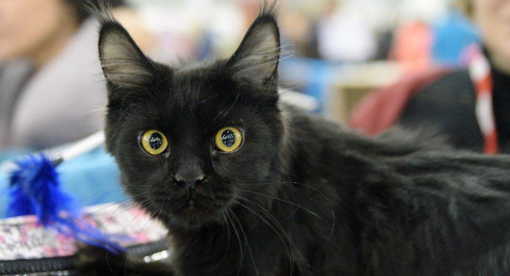 波兰有一只猫会照顾生病的动物