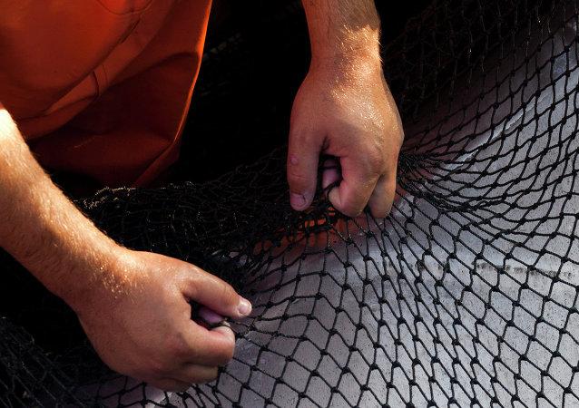 媒体:三亚海滩现大量死鱼 官方称系渔民渔网破裂所致