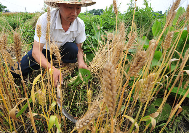 中国四川大批农业龙头企业拟进军俄罗斯市场