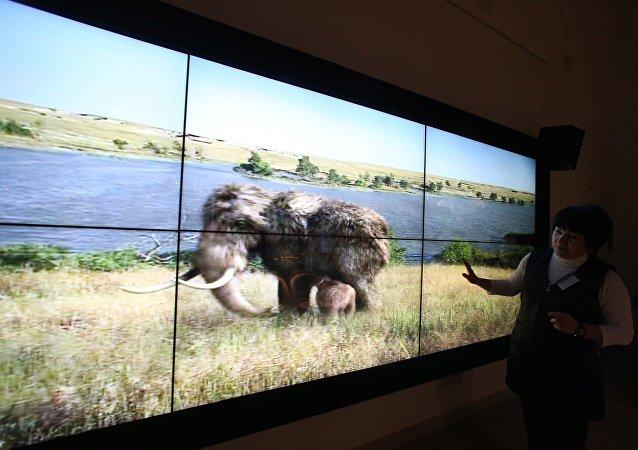 俄雅库特发现10万年前猛犸象祖先的骨架