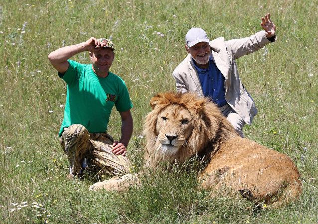 狮子/资料图片/