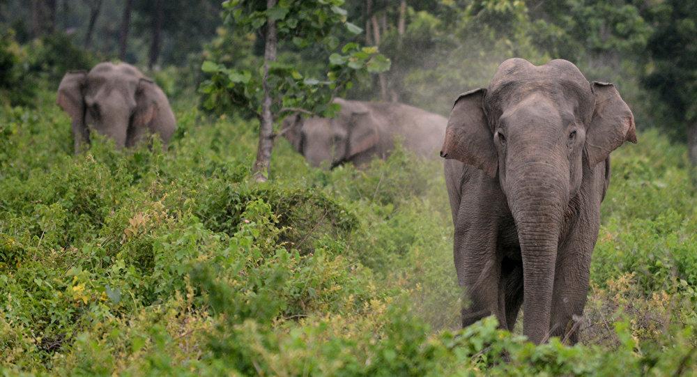 云南一农妇受野生大象攻击身亡