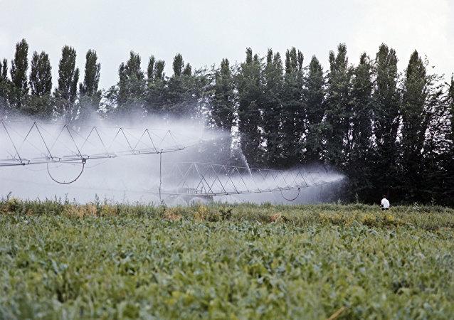 俄犹太州州长:绿色食品的需求保障农产品对华出口量增长