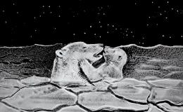 北極熊的居住地,到底受到哪幾種威脅?