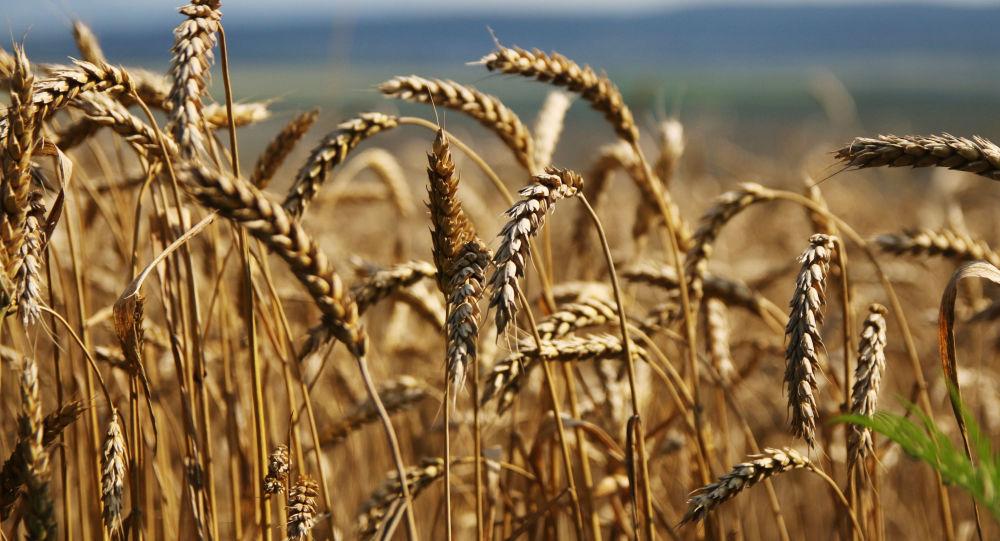 俄羅斯政府支持將糧食出口零關稅措施至少再實施2年