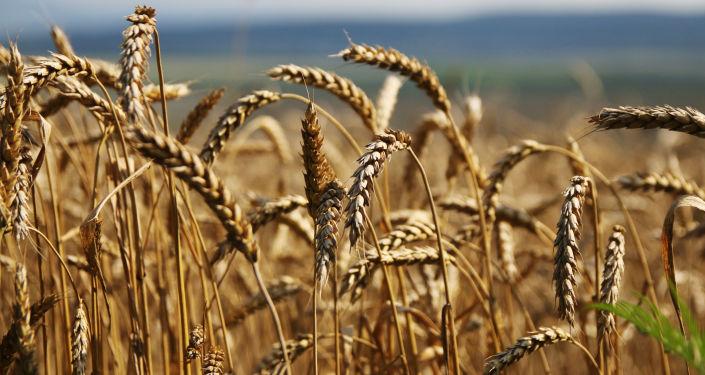 中国最大批发市场代表将参加俄远东农业食品博览会