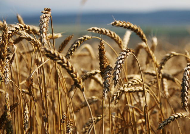 孟加拉签署从俄进口粮食声明