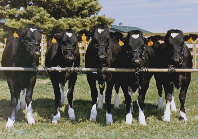 墨西哥希望对俄出口2万吨牛肉
