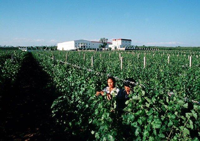智利人计划在中国开设私人法式酒庄