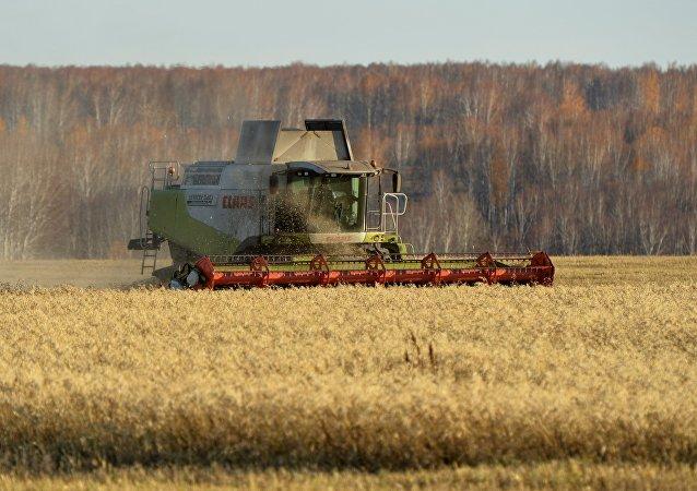 俄总理:俄中商定开发农业领域潜力