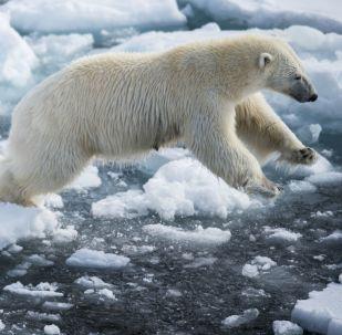 加拿大专家:北极理事会应为中国等非北极国家提供成员地位