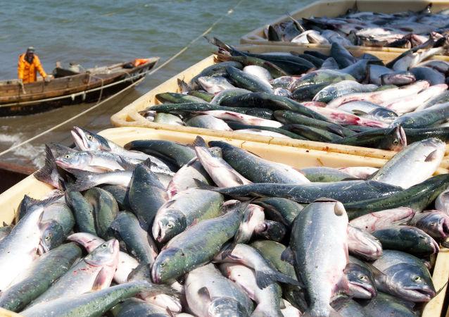 远东渔业将对外国投资者开放