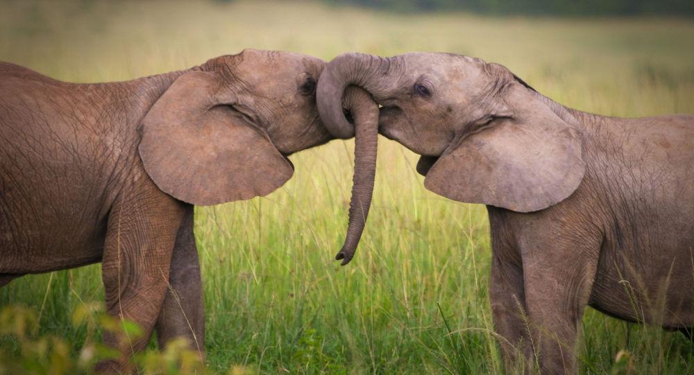 印度大象用大象对付非法居民点