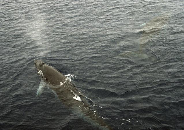 媒体:日本渡轮撞上鲸鱼 87人受伤
