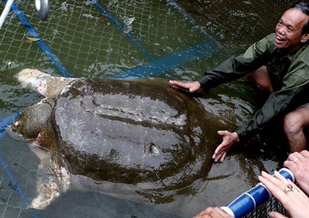 一只被视为越南传统象征的长寿龟在该国党代会前去世