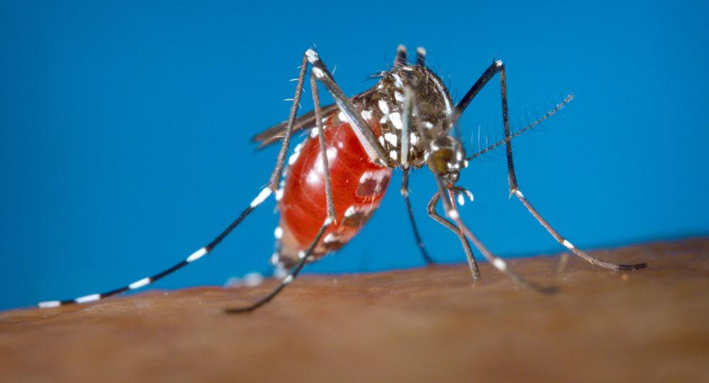 媒体:法国发现一例基孔肯雅热病例