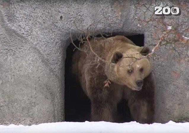 暖季催熊早醒
