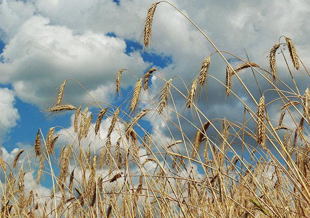俄远东发展部长:俄中农业基金的90%将由中方出资