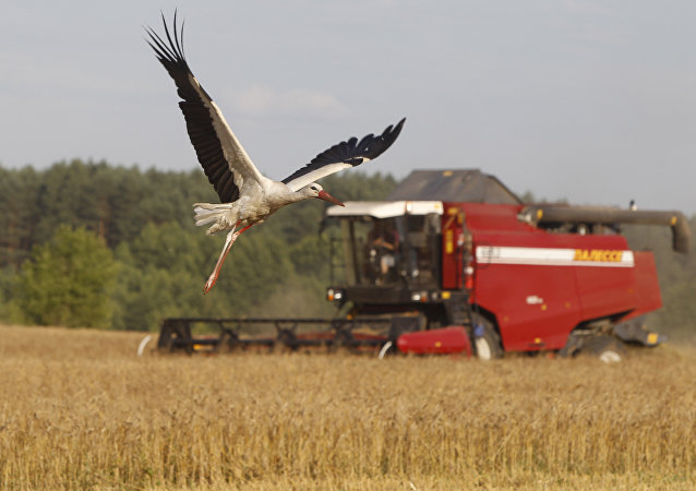 俄2016-2017农业年粮食出口增长或创4000万吨纪录