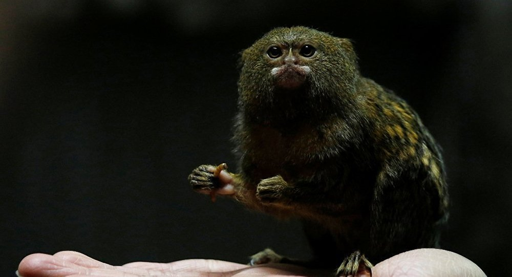 微信动物呆萌小猴头像