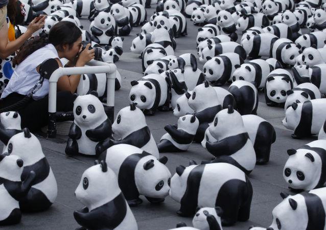 """为保护野生大熊猫及其栖息地,法国于2008年启动一项名为""""1600只大熊猫""""的艺术计划。"""