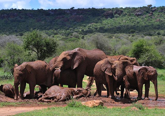 南非国家公园的一头大象杀死一名偷猎者