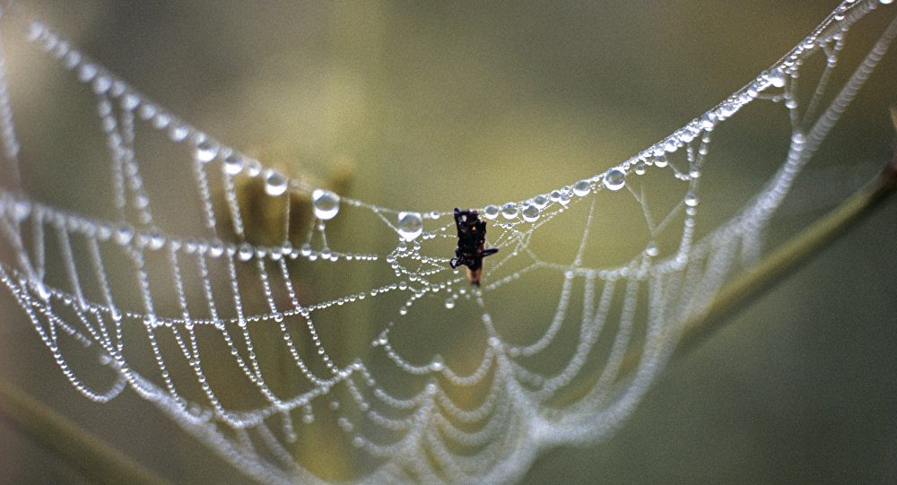媒体:蜘蛛丝上衣将在日本面市