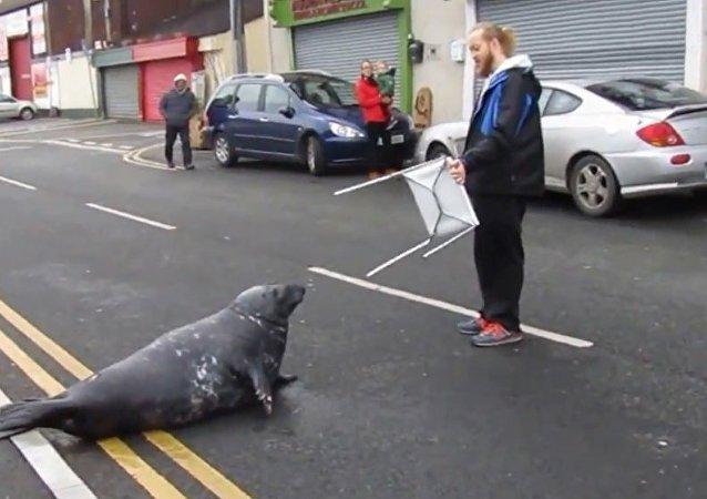 萌翻!每天都冲上河岸餐馆要鱼吃的海豹!