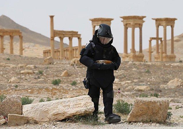 俄议员否认媒体有关俄私企将参与叙利亚排雷工作的报道