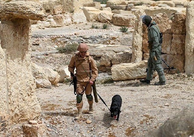 俄工兵在叙巴尔米拉排除1.8万爆炸物 已开始为居民区排雷