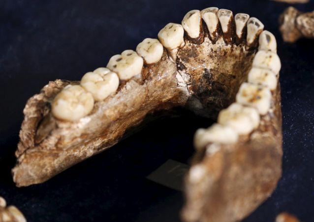 人类学家将可通过牙齿判断古人类性别
