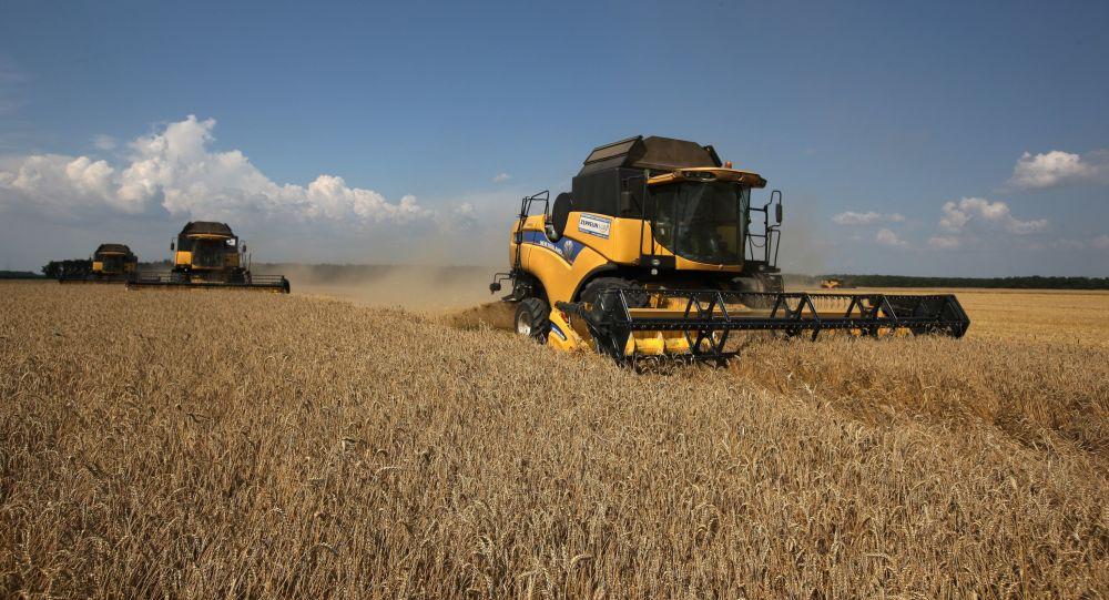 俄农业部长:俄罗斯将在2016年开始向中国出口小麦