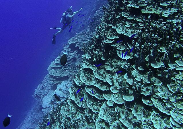中国外交部:日本对冲之鸟礁海域的声索严重损害国际社会共同利益