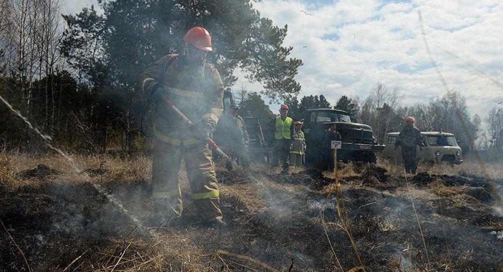 俄远东多数森林火灾已被扑灭