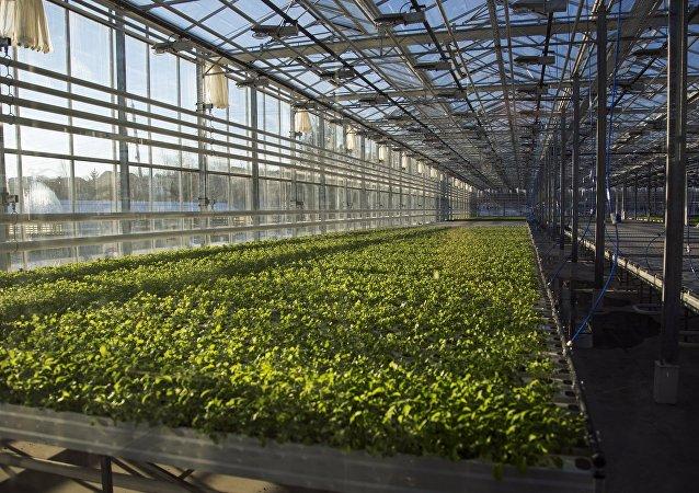 中国企业家拟在克里米亚建立蔬果种植农场网