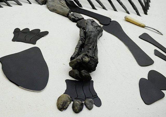媒体:科学家在南极发现一吨多恐龙遗骸
