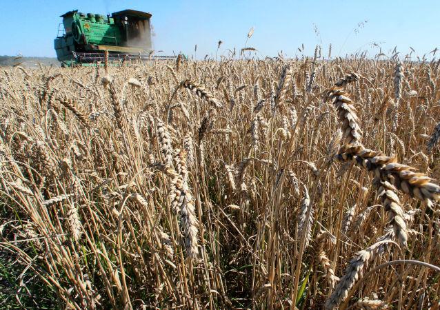 美农业部:2018/19年度俄罗斯仍将领衔全球小麦出口