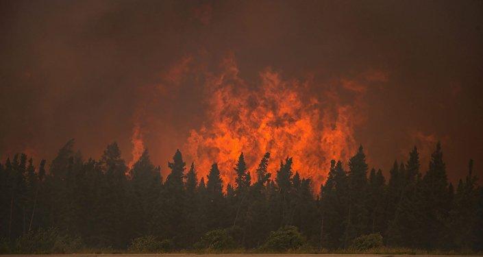 俄濱海邊疆區一晝夜內火災毀林逾30公頃