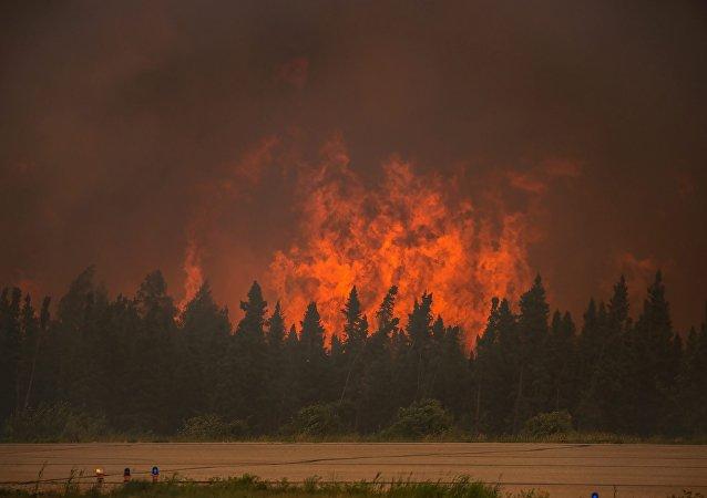 俄滨海边疆区一昼夜内火灾毁林逾30公顷