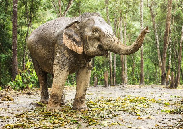 摩洛哥动物园的大象甩石打死小女孩