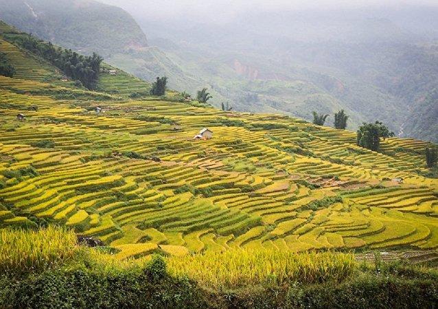 水稻传播与古时发生的生态灾难有关