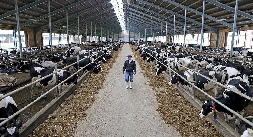 中國公司將為俄濱海邊疆區畜牧綜合體投資3億美元