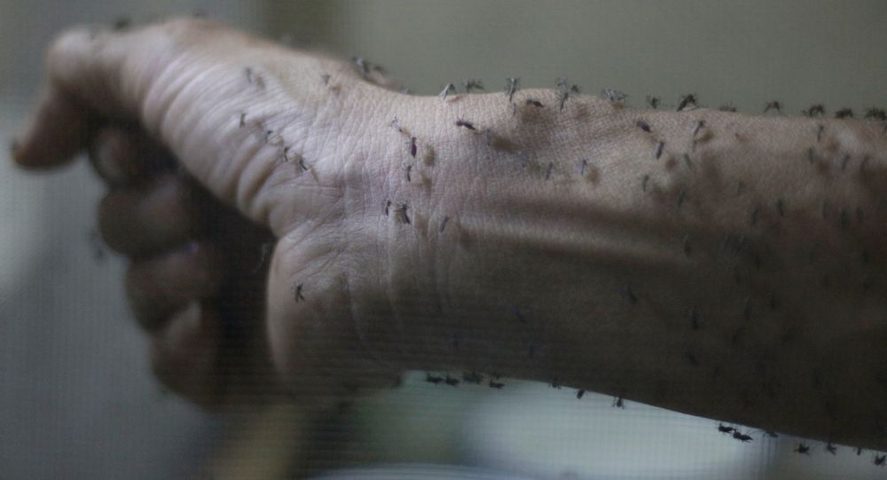 俄消費者權益保護監督局:巴西寨卡疫情依然嚴重