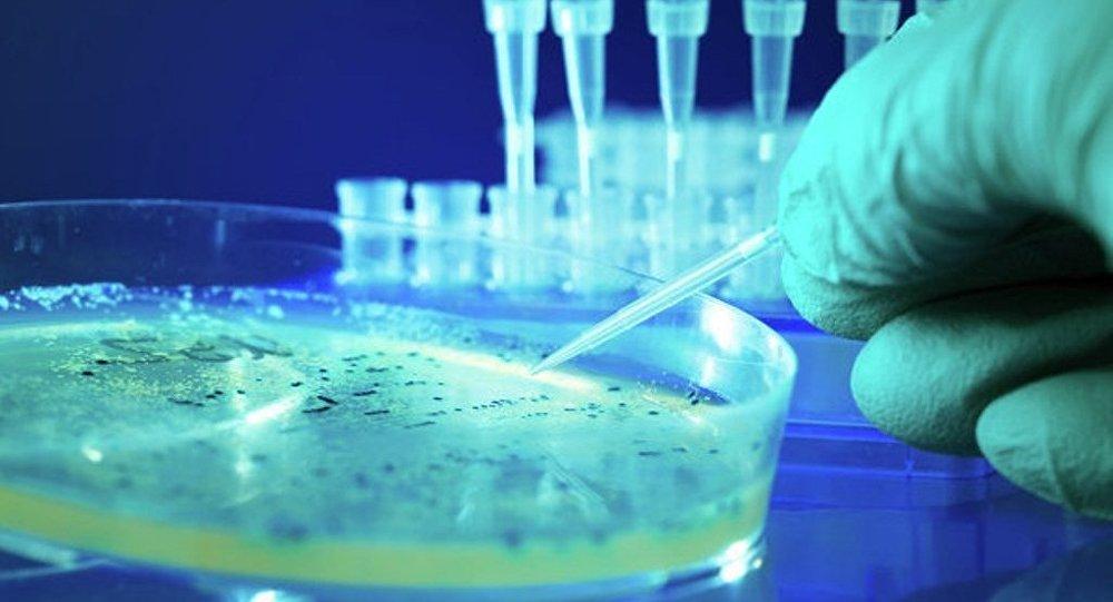 """美国首次发现""""超级细菌"""" 可抵抗所有抗生素"""