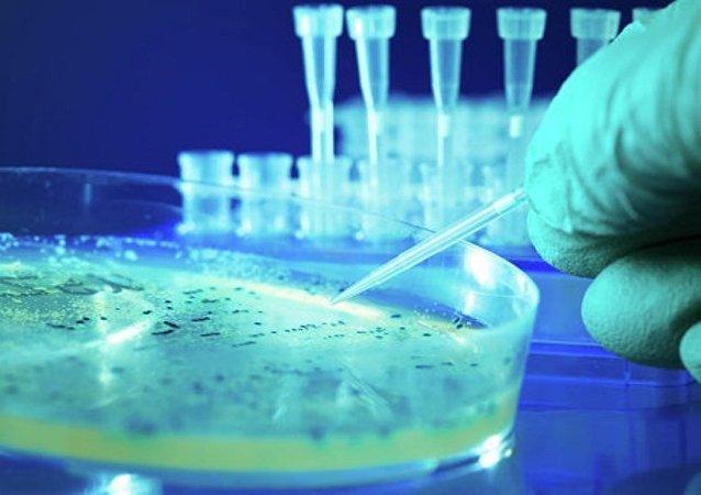 美國首次發現「超級細菌」 可抵抗所有抗生素