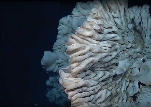 太平洋底发现世上最大海绵