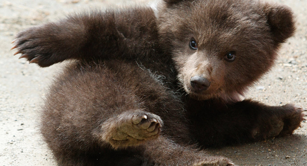 Dog And Bear Cubs Video