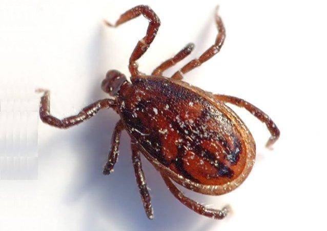 俄公益监督局:俄罗斯对11.7万公顷公园进行消毒除蜱工作