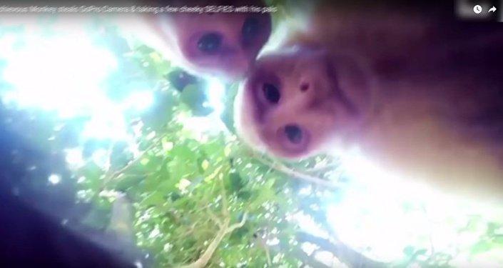 猴子也玩儿自拍